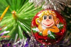 Das Bild eines Affen auf einer Niederlassung der Fichte Lizenzfreie Stockbilder