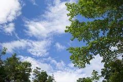 Das Bild eines Baums mit blauem Himmel für den Hintergrund Stockfotografie
