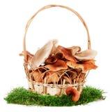 Das Bild eines Korbes mit den Pilzen, getrennt Stockfoto