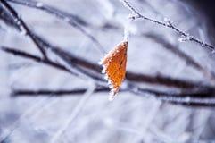 Das Birkenblatt bedeckt durch den Schnee Lizenzfreie Stockfotos
