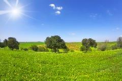 Das blühende Feld mit camomiles und Bäumen Lizenzfreies Stockbild