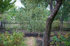 Das blühende Grün des Gartens nach dem Regen im Sommer Topfpflanzen auf der Straße Lizenzfreie Stockbilder