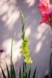 Das blühende Grün des Gartens nach dem Regen im Sommer Topfpflanzen auf der Straße Stockbilder