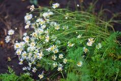 Das blühende Grün des Gartens nach dem Regen im Sommer Topfpflanzen auf der Straße Stockfotos