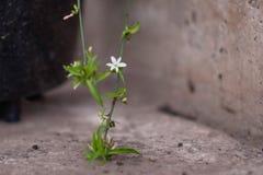 Das blühende Grün des Gartens nach dem Regen im Sommer Topfpflanzen auf der Straße Stockfotografie