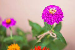 Das blühende Grün des Gartens nach dem Regen im Sommer Topfpflanzen auf der Straße Lizenzfreie Stockfotos