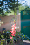 Das blühende Grün des Gartens nach dem Regen im Sommer Topfpflanzen auf der Straße Lizenzfreies Stockfoto