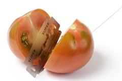 Das Blatt und die Tomate Stockbilder