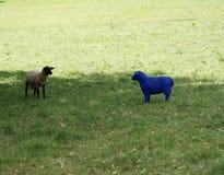 Das blaue Schaf als Zahl wird über durch das Lamm gewundert stockbilder