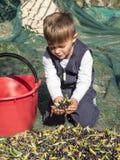 Das blonde Baby, das im Land plattiert ist, sammelt Oliven mit ihren Händen an Lizenzfreie Stockbilder