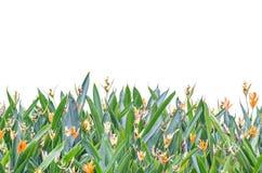 Blumen-Rahmen Stockfotografie