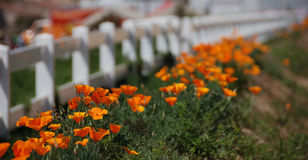 Das Blumenfeld Lizenzfreie Stockfotos