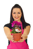 Das Blumenhändlerfrauen-Angebot cyclamen Lizenzfreie Stockfotografie
