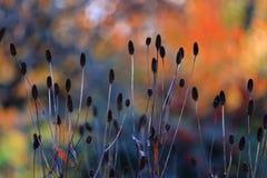 Das bokeh des Herbstes Stockbild