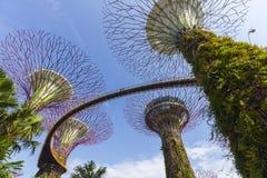 Das botanische des Gartens durch die Bucht in der Stadt in Singapur Lizenzfreie Stockbilder