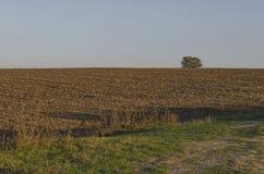 Das Brachefeld mit alleinem Baum im Herbst Stockfotos
