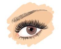 Das braune Auge des Mädchens lizenzfreie abbildung