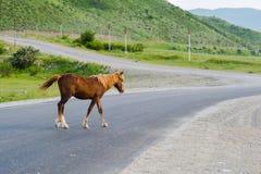 Das braune einsame Pferd, welches die Straße kreuzt Stockfotos