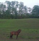 Das braune Pferd Lizenzfreies Stockbild