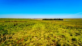 Das breite offene Ackerland entlang dem R39 in der Vaal-Flussregion von Süd-Mpumalanga Stockbild