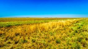 Das breite offene Ackerland entlang dem R39 in der Vaal-Flussregion von Süd-Mpumalanga Lizenzfreie Stockfotografie