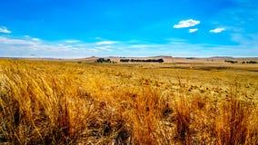 Das breite offene Ackerland und die entfernten Berge entlang dem N3 zwischen Wärter und Villiers in der Freistaatprovinz Lizenzfreie Stockfotos