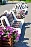 das brench und die Blumen der Sommer blüht wirkliche Blumen stockbilder