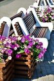 das brench und die Blumen der Sommer blüht wirkliche Blumen lizenzfreies stockbild