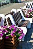 das brench und die Blumen der Sommer blüht wirkliche Blumen lizenzfreie stockfotografie