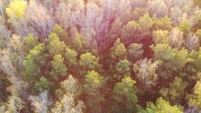 Das Brummen fliegt über die Waldansicht von oben Herbst, gefallene Blätter stock video footage