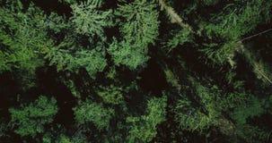 Das Brummen, das langsam oben über ruhiger grüner Wald-Luft-vertikale Draufsicht 4K steigt, schoss von schönen immergrünen Kiefer stock footage