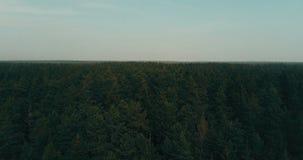 Das Brummen, das vorwärts über immergrüner Wald-Luft-Überführung 4K topview fliegt, schoss von den drastischen dunkelgrünen üppig stock video