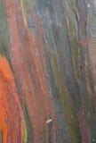 Eukalyptus-Baumrinde Lizenzfreie Stockfotografie