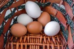 Das bunte Ei im Korb Lizenzfreie Stockfotografie
