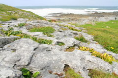 Das Burren Lizenzfreie Stockfotos