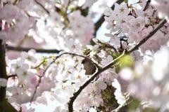 Das bushtit ist im Blumenbeet stockbilder
