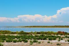 Das Camargue-Delta, Frankreich lizenzfreies stockfoto