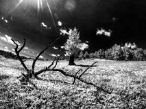 días de fiesta en el aire fresco Imagen de archivo libre de regalías