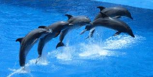 Das Delphin-Springen Lizenzfreie Stockfotografie