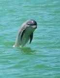 Das Delphin-Springen