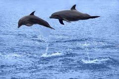 Das Delphinspringen stockfoto