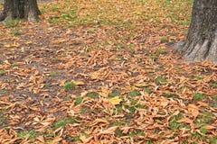 Das Detail der Herbstsaison mit den Blättern gefallen Stockbild