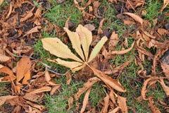 Das Detail der Herbstsaison mit den Blättern gefallen Stockfotos