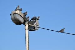 Das Detail der Vögel auf dem Draht, Taube Lizenzfreie Stockbilder