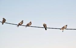 Das Detail der Vögel auf dem Draht, Taube Stockbilder