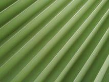 Das Detail einer Palme Stockbild