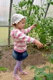 Das dreijährige Mädchen betrachtet Tomaten im Gewächshaus stockfoto