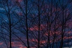 Das dunkle Schattenbild von Bäumen bei Sonnenuntergang Lizenzfreie Stockbilder