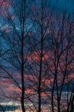 Das dunkle Schattenbild von Bäumen bei Sonnenuntergang Lizenzfreie Stockfotografie