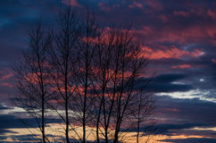 Das dunkle Schattenbild von Bäumen bei Sonnenuntergang Stockfotografie